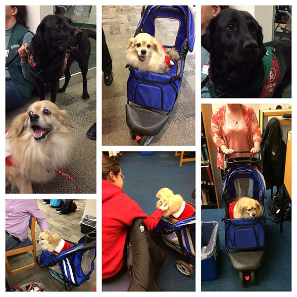 Dogs at Scott